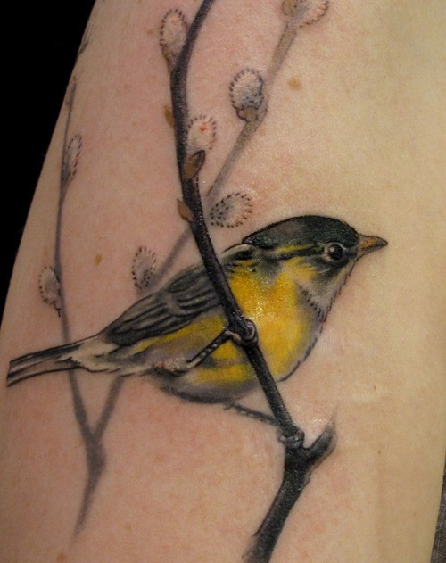 Bird Tattoo Design Gallery Meaning &amp Ideas
