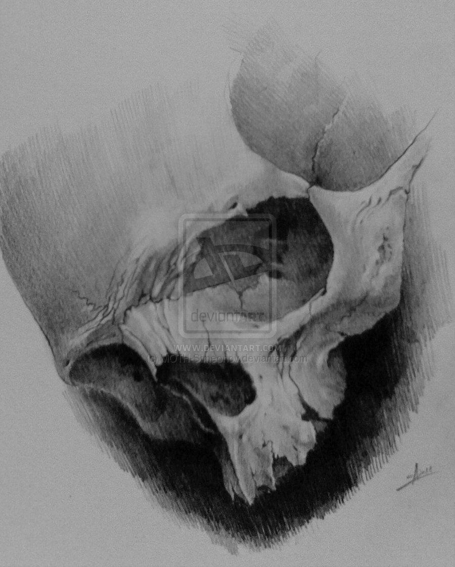 Moth Skull Meaning Moth-simeonov-skull-tattoo