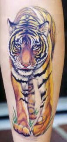 tiger tattoo designs for men. Black Bedroom Furniture Sets. Home Design Ideas