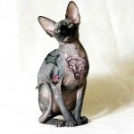 Tattoo on Cat, tattoo designs, tattooing, tattoos, designs, piercing, ink, pictures, images, Cat